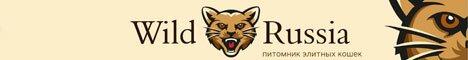 Бенгальские кошки питомник Wild Russia